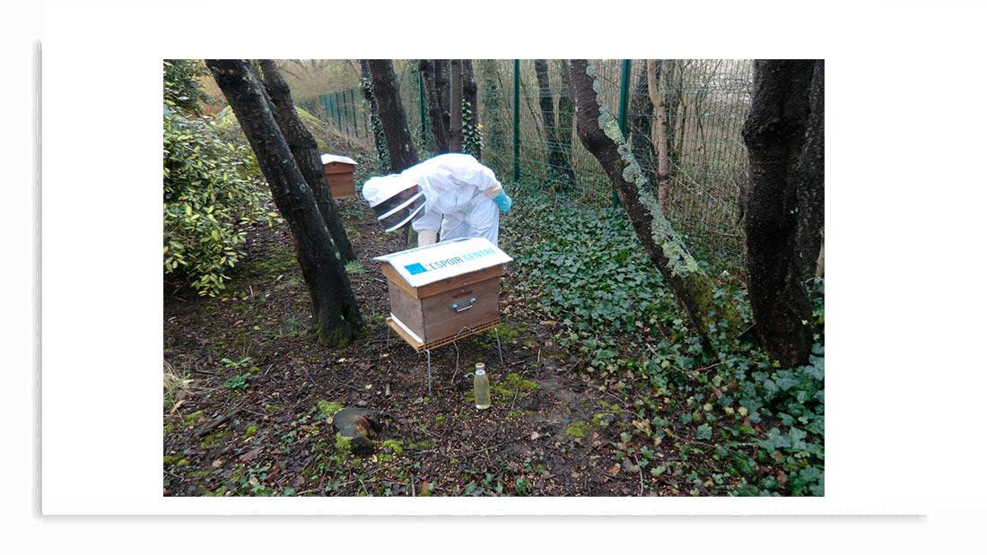 abeilles espoir